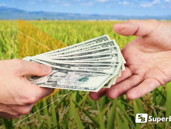 Rentabilidad en la Agroindustria Arrocera / Profitability in Rice Industry